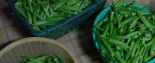 農産物の生産事業