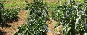 生命をつなぐ体験農園事業