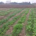 【12月5日】畑で鍋の野菜を収穫して鍋パーティ(秋葉原から40分 TXみらい平)
