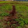 太陽熱マルチ雑草処理の代替技術の可能性